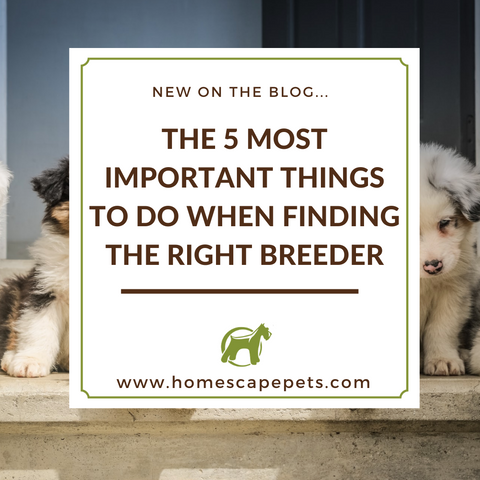 5 Tips for Finding The Best Breeder