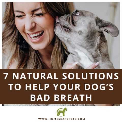 Natural Solutions for Your Dog's Bad Breath
