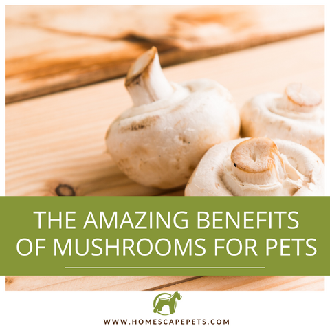 Benefits of Mushrooms for Pets