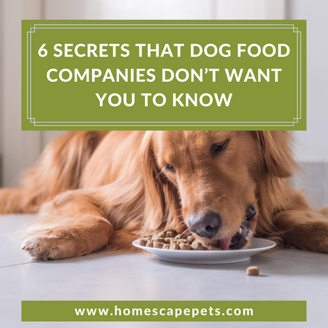 6 Secrets That Dog Food Companies Don't Want You to Know