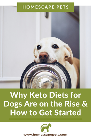 Benefits of a Keto Diet for Pets