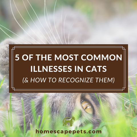 Common Illnesses in Cats