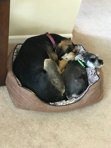 Quinn and Minnie share the tiniest bed