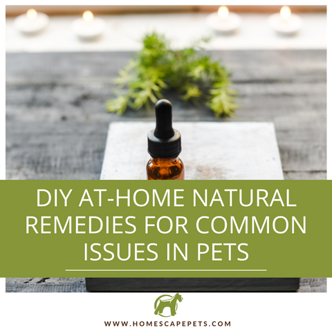 DIY Natural Remedies for Pets