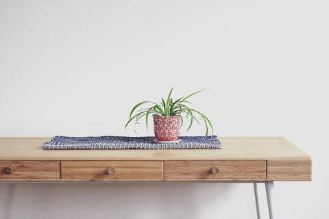 Spider Plant - Safe for Pets