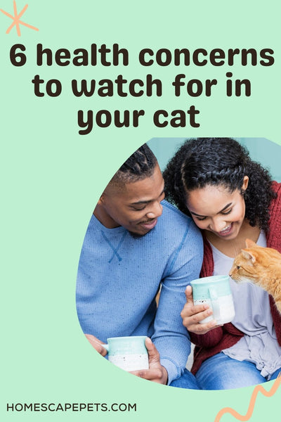 African American couple looking lovingly at an orange tabby cat and holding a coffee mug