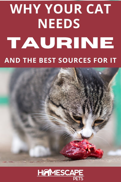 Why Your Cat Needs Taurine