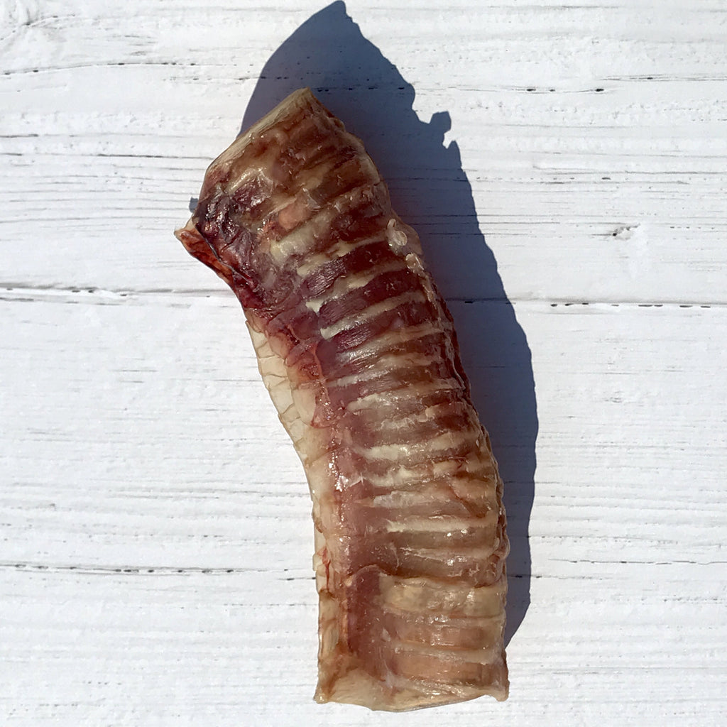 Air-Dried Beef Trachea for Dogs and Cats - Homescape Pets