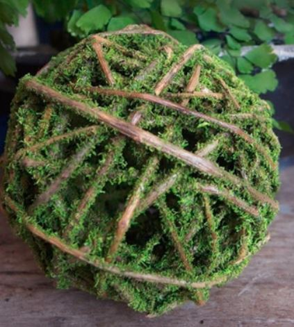 Curly Willow Moss Ball