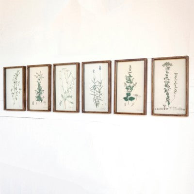 Collected Botanical Prints