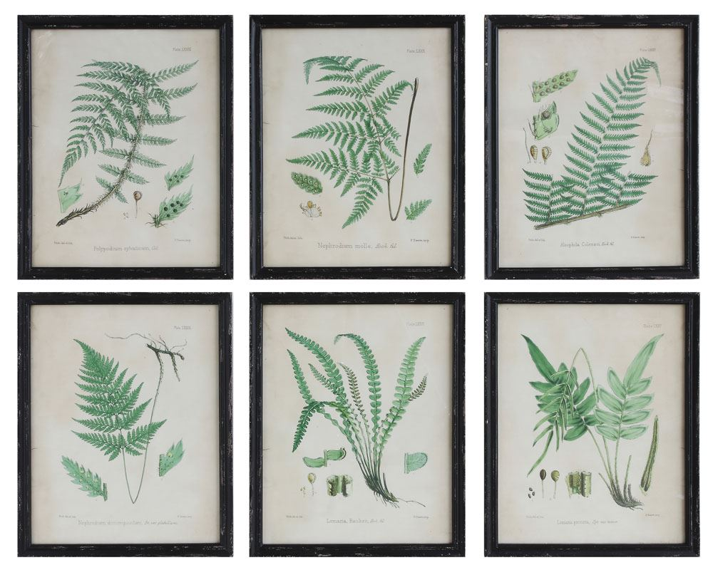 Framed Fern Prints