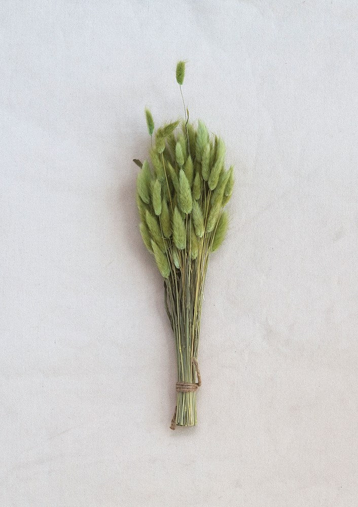 Dried Natural Bunny Grass Bunch, Green