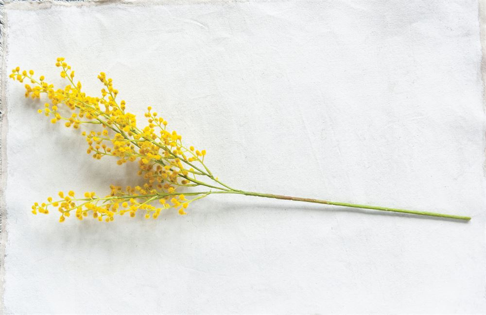 Faux Wattle Stem in Yellow