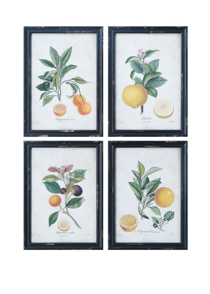Wood Framed Citrus Prints (Store Pickup Only)