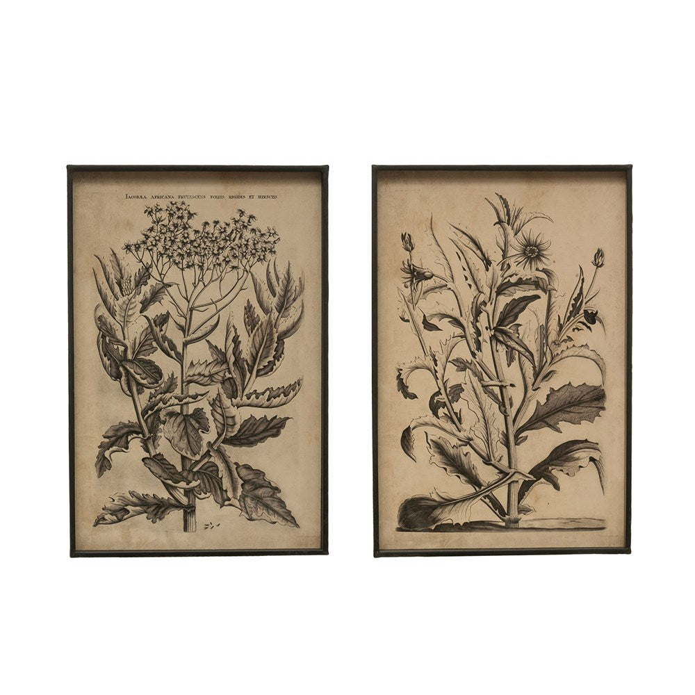 Antiqued Black Botanical Print