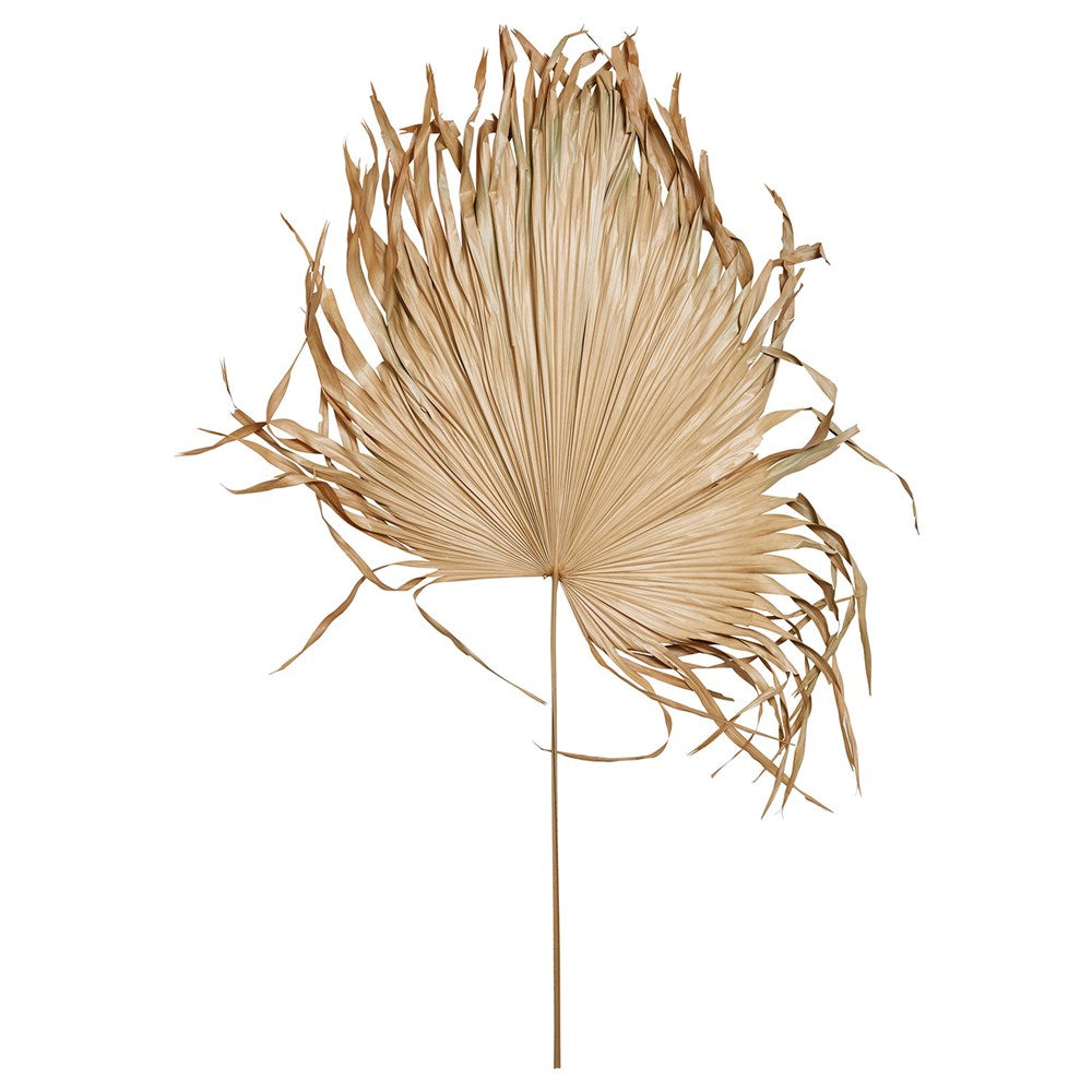 Dried Natural Palm Fan Leaf