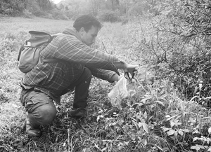 Foraging means feeding the land and letting it feed us