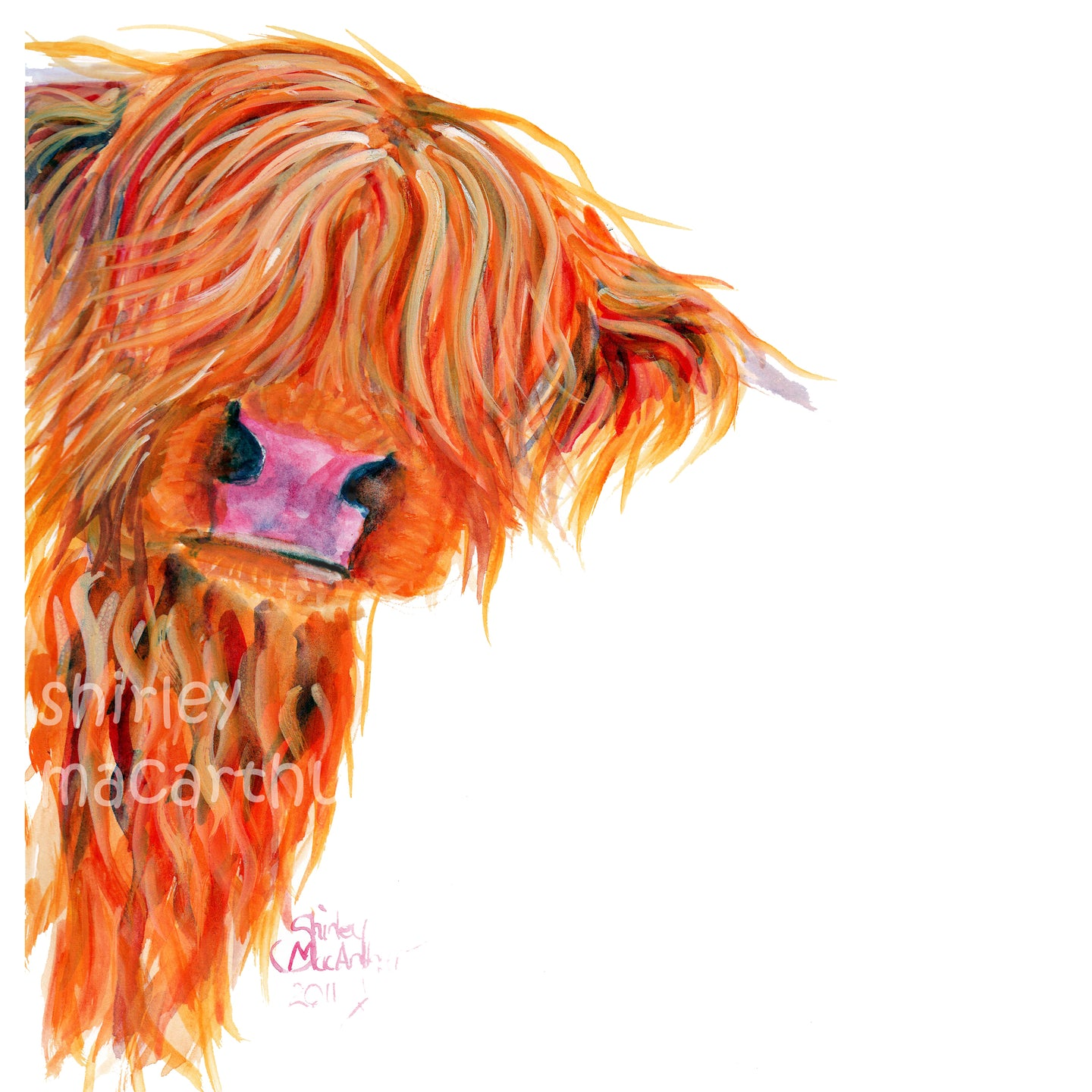 Highland Cow Prints 'Peekaboo' by Shirley MacArthur
