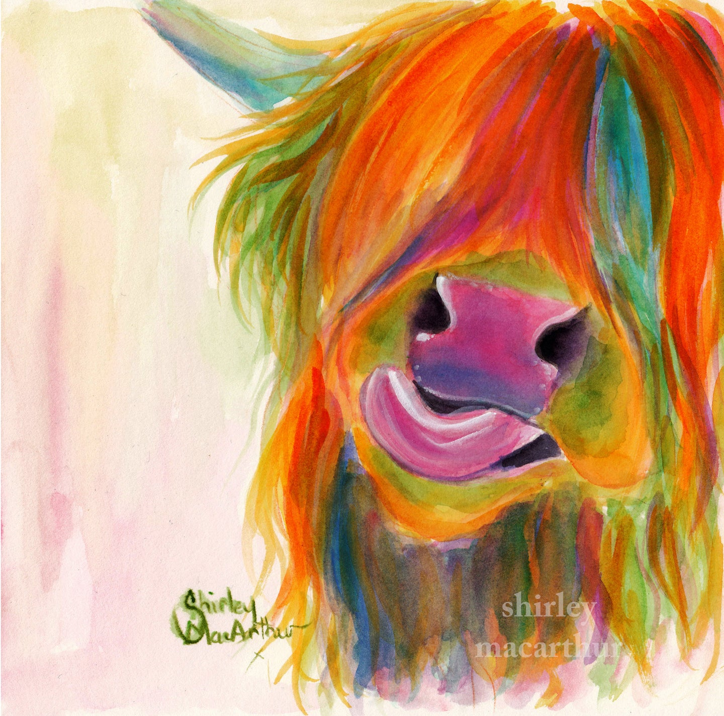 Highland Cow Prints 'JuiCY FRuiT JoSie' by SHiRLeY MacARTHuR