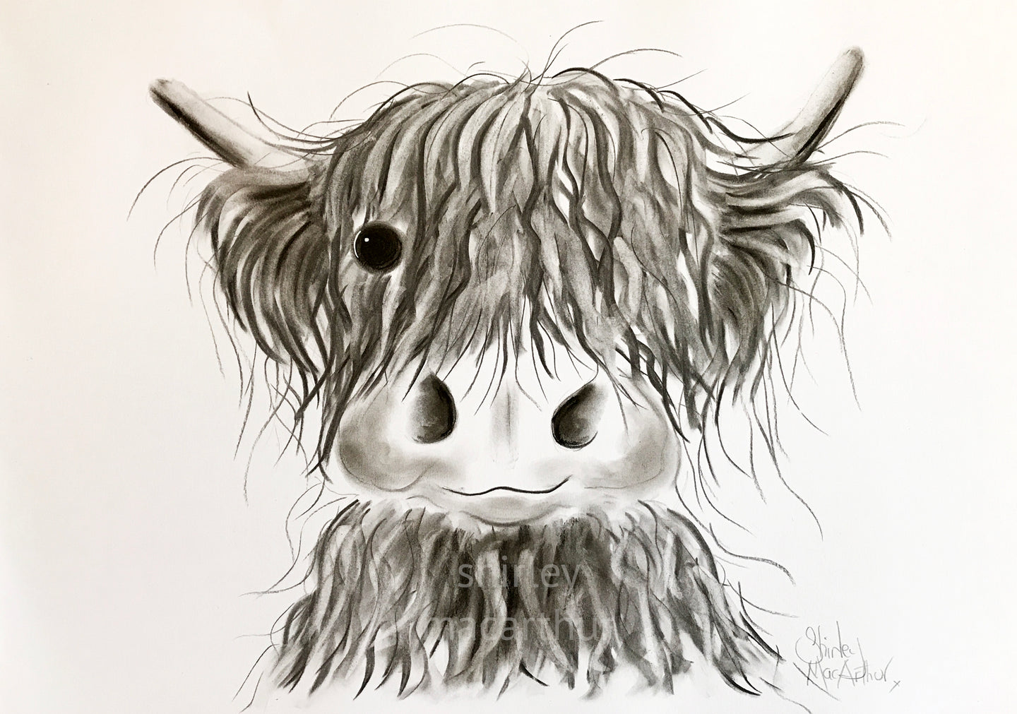 CHaRCoaL ORiGiNaLS! HiGHLaND CoW PaiNTiNGS - No 6