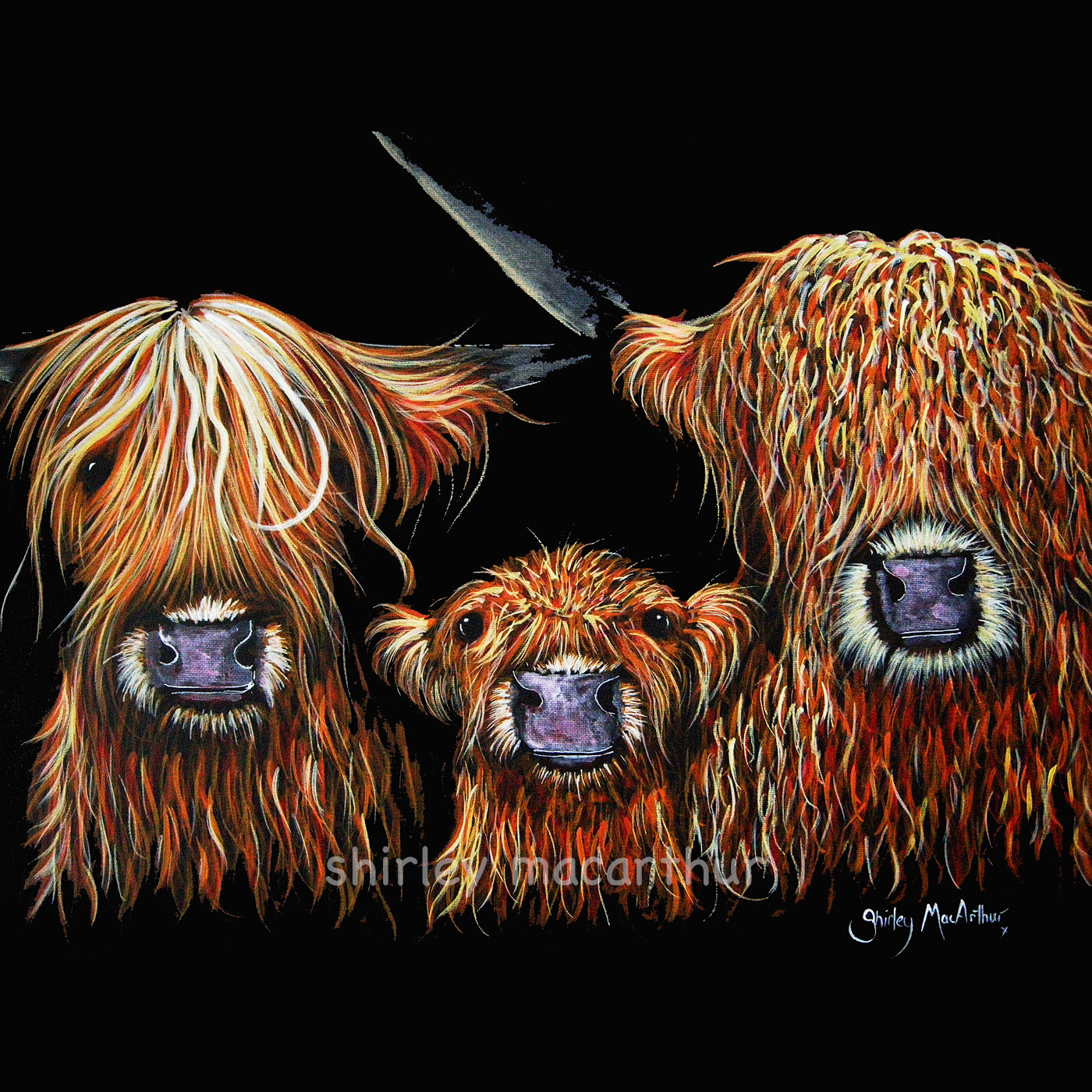 Highland Cow Prints 'We 3 COOS oN BLaCK' By SHiRLeY MacARThuR
