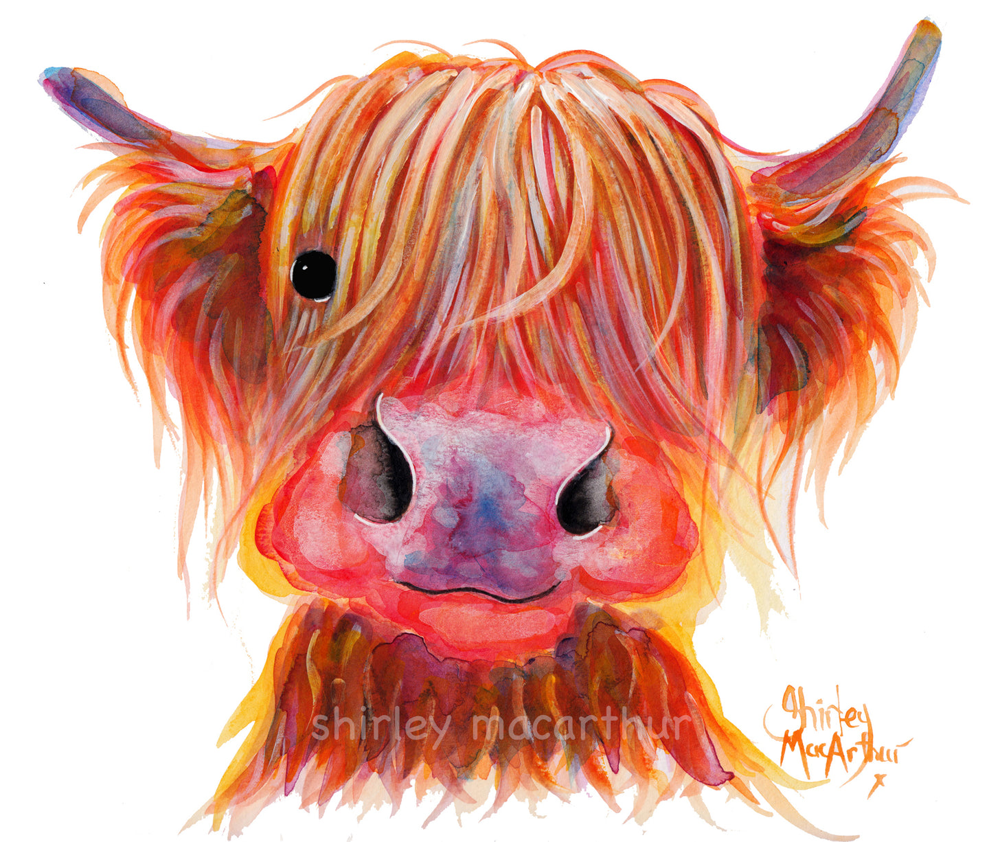 Highland Cow Prints 'Chilli Chops' by Shirley MacArthur