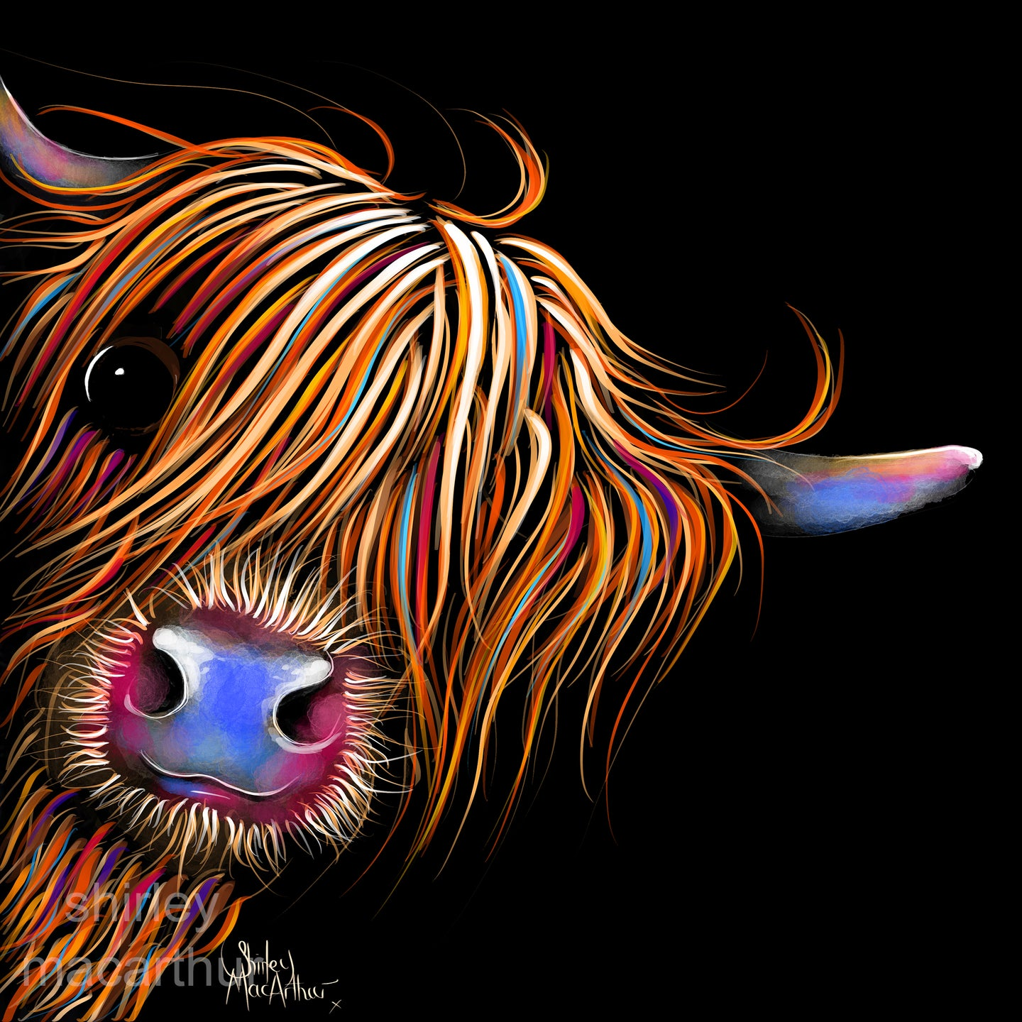 ' SuGaR LuMP oN BLaCK ' HiGHLaND CoW PRiNT, WaLL ART - BY SHiRLeY MacARTHuR