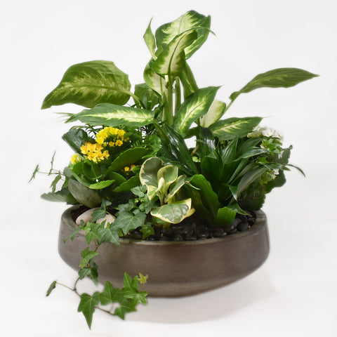 Tropical Plants in Grey Concrete Bowl