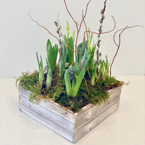 Spring Bulb Mix in Square Whitewashed Wooden Box