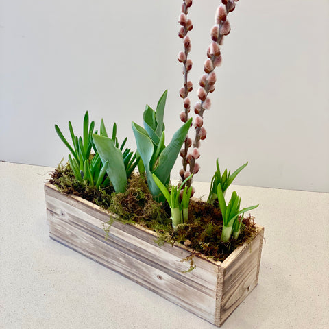 Spring Bulb Mix in Rectangular Whitewashed Wooden Box