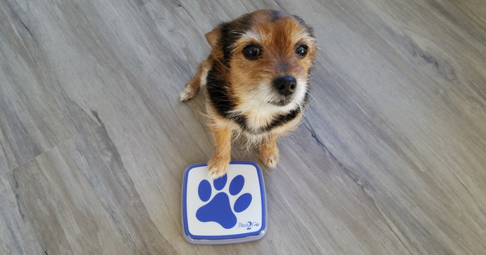 How to Use Paws2Go to Potty Train your Dog