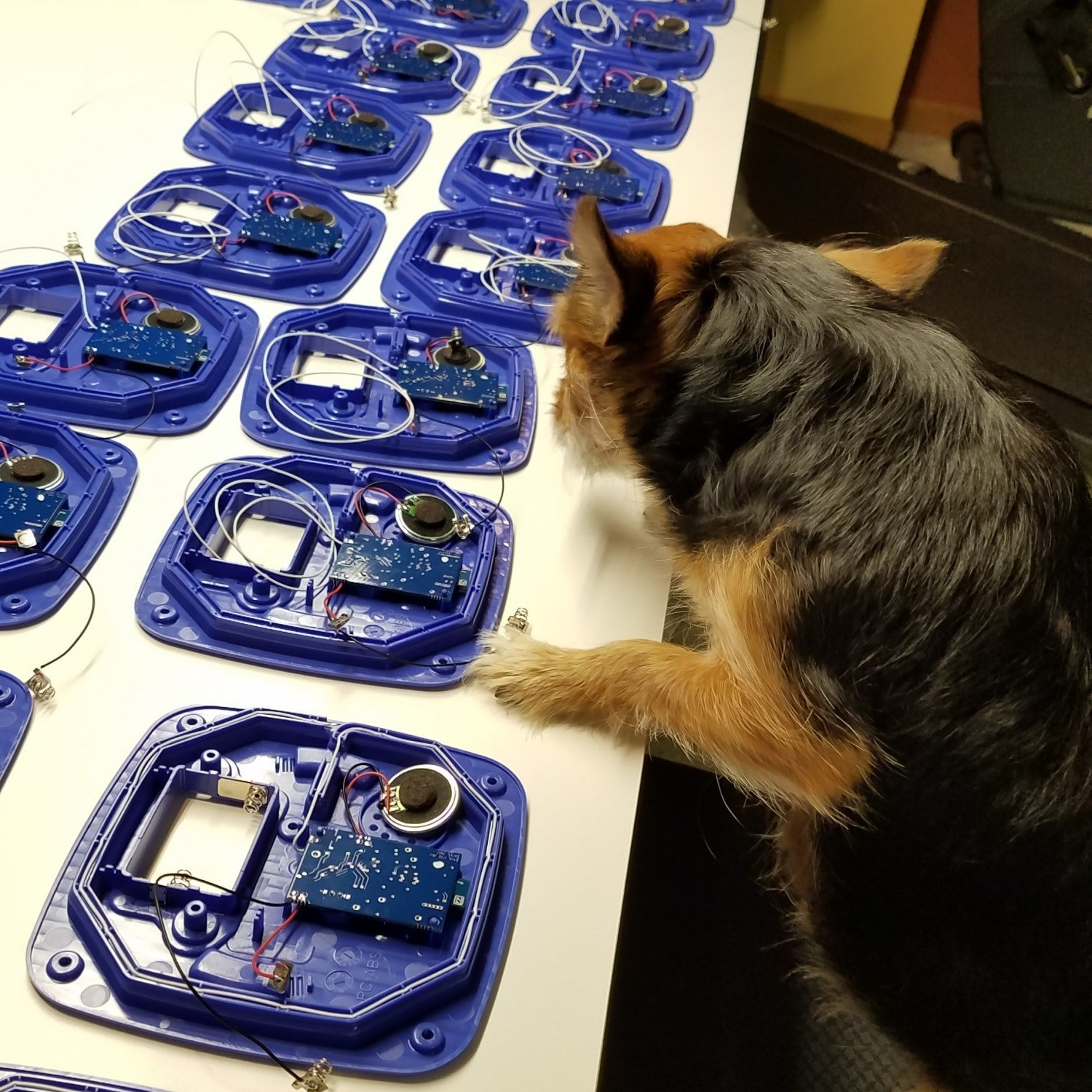 Reese inspecting production line of Paws2Go units