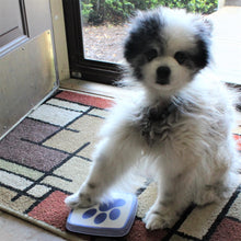 Eros touching the Paws2Go dog doorbell
