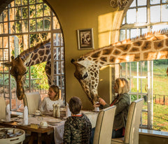 Giraffes have breakfast with family at Giraffe Manor in Kenya