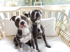 Rudy and Blue Top Dogs of Rudyblu Jewelry