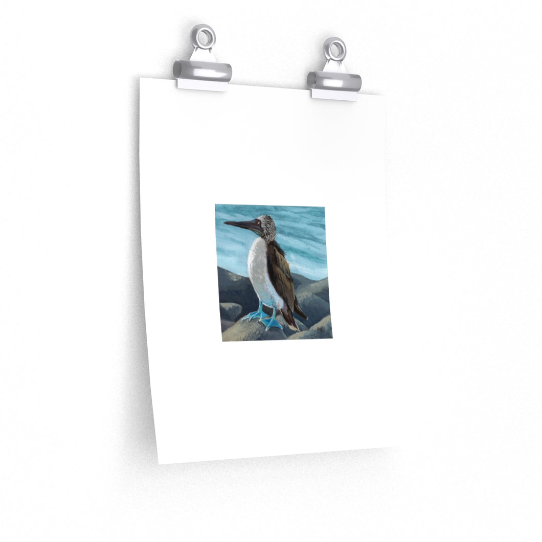 Blue-Footed Booby - Print