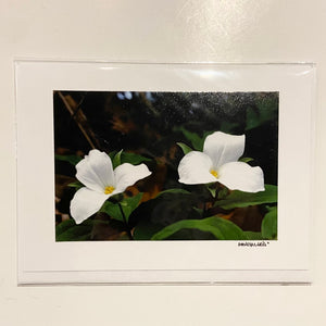 David Allen Photography Card