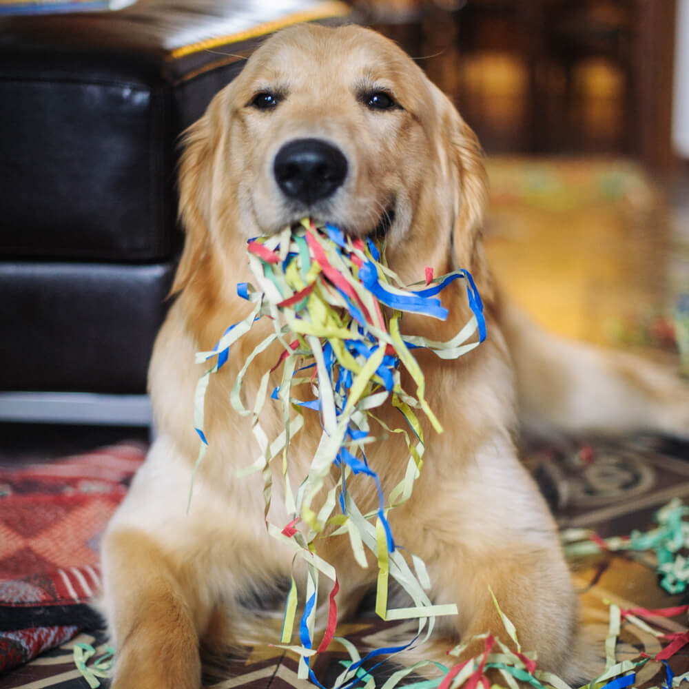 Birthday Gifts For Dogs