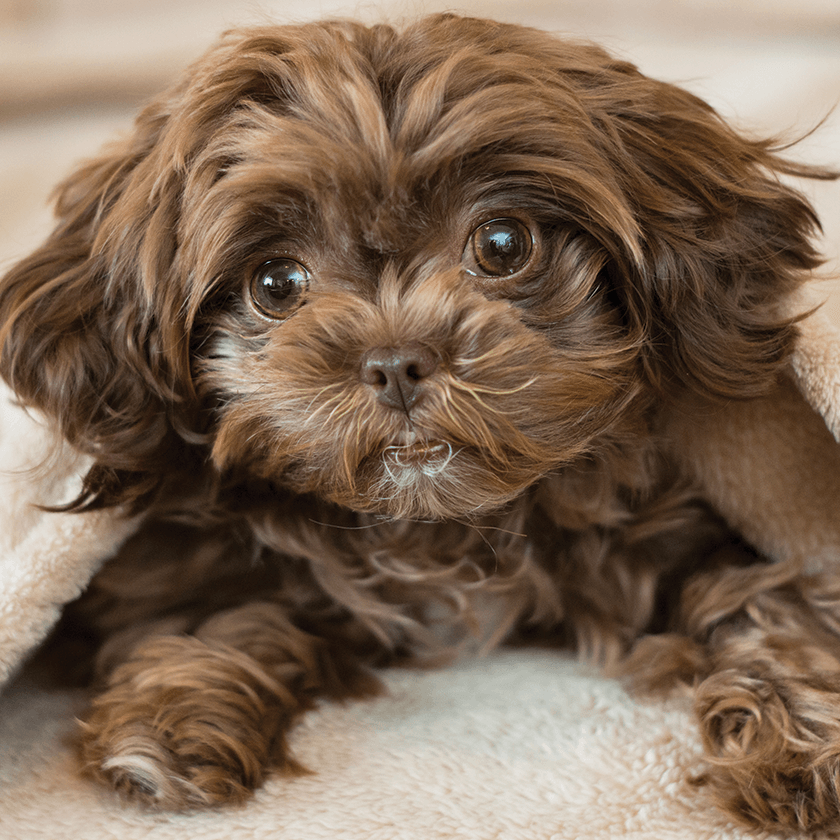 Send New Puppy Gift to Fairfield, California