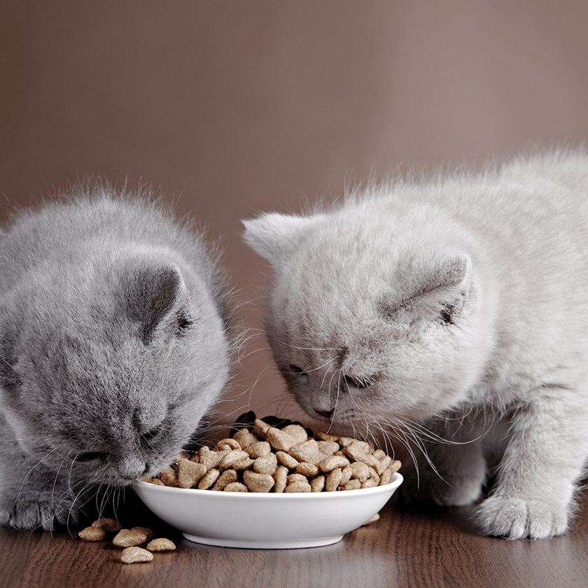 Send a Freshly Baked Cat Treat to Turlock, California