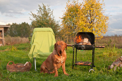 Pet Safety BBQ Food For Pets