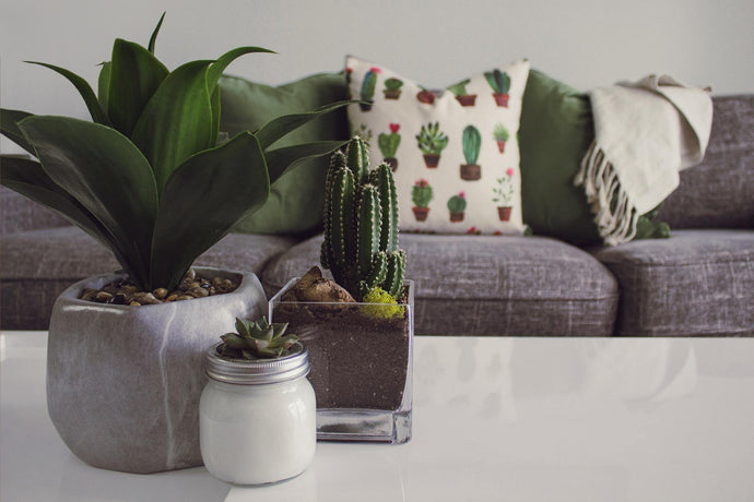 Styling With Plants - Botanical Vibes For Your Home