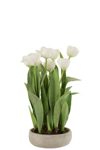 Potted Bunch Of White Tulips