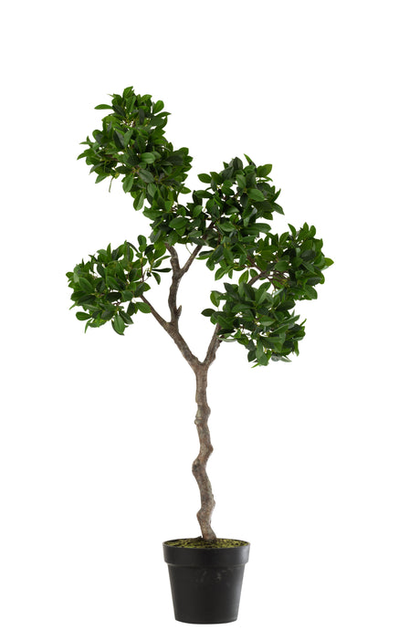 Ginseng Ficus Faux Tree