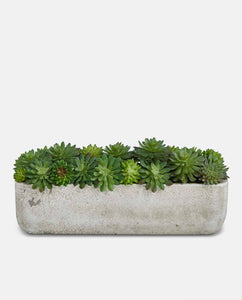 Mixed Echeveria Bowl faux Succulent - concrete pot