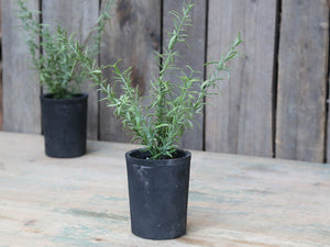 Rosemary Herb In Rustic Flowerpot