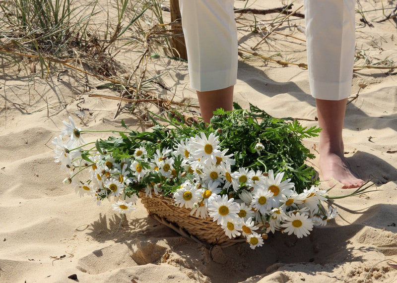 A basket of white marguerites on the sand