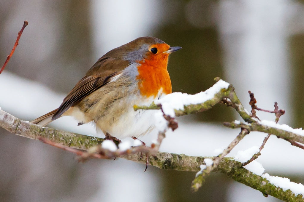 10 reasons this bird food will make your birds happy!