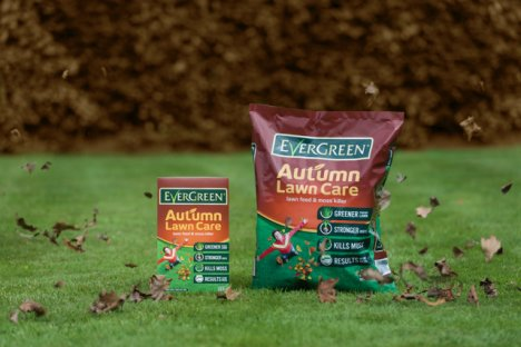 Evergreeen autumn lawn care