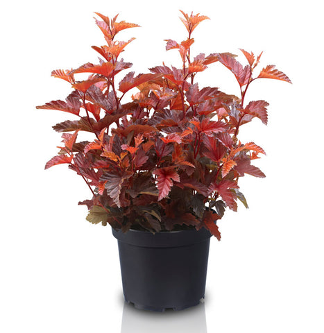 Is this the sexiest foliage plant ever?
